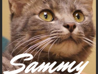 Meet Sammy! FAV's Cat of the Week
