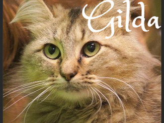 Meet Gilda! FAV's Cat of the Week