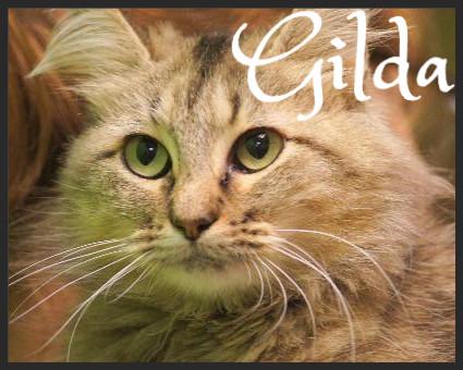 Gilda (Pet ID# 35512)_Little Rock Animal Village_Friends of the Animal Village