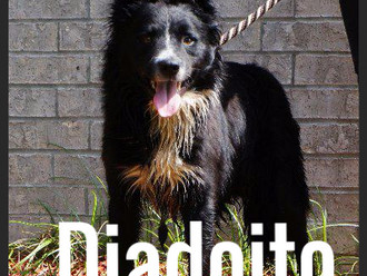 Meet Diadoito! FAV's Dog of the Week