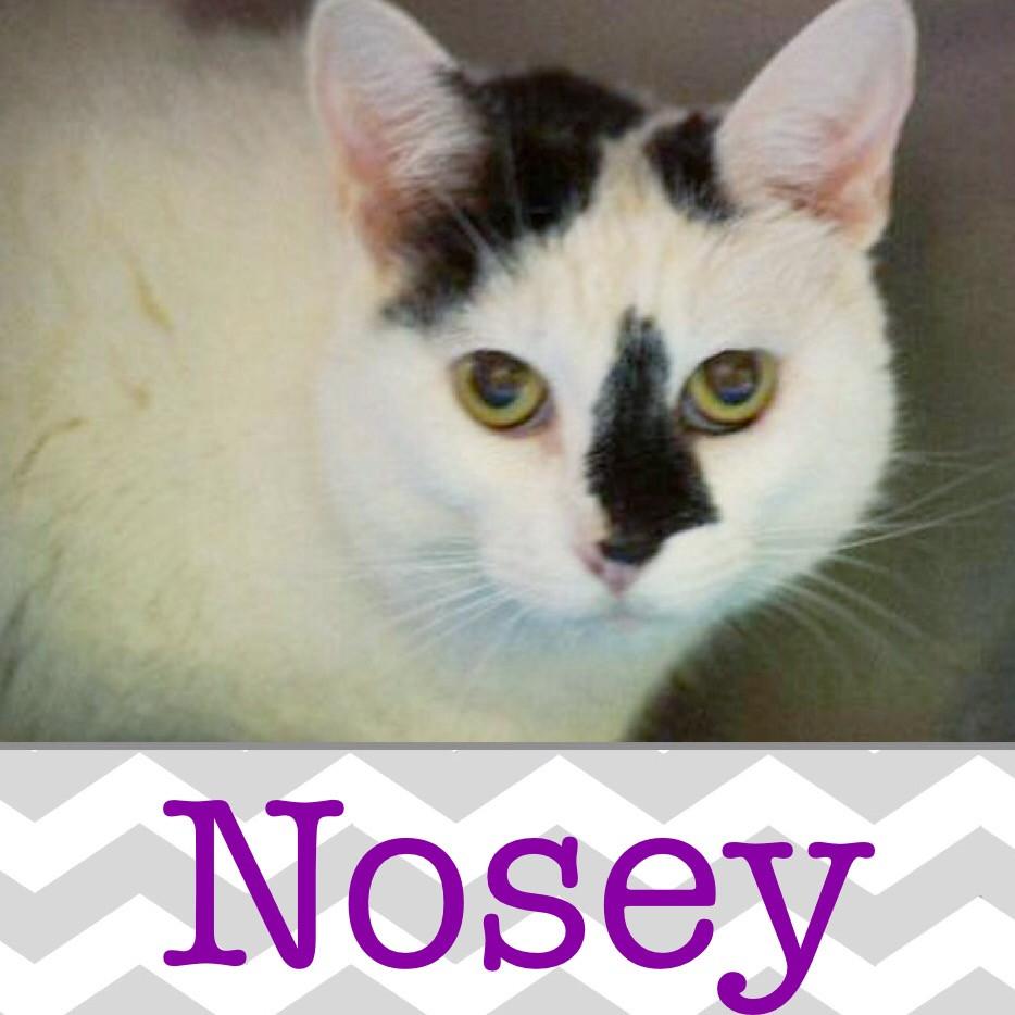 Nosey_Pet ID# 34011