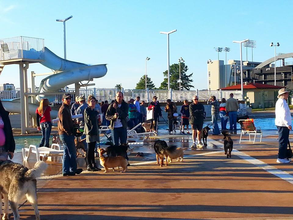 Doggie Paddle Day_Crowd Shot 3.jpg