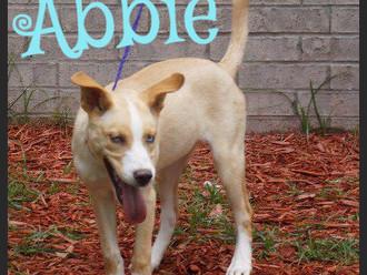 Meet Abbie! FAV's Dog of the Week