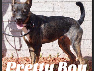Meet Pretty Boy! FAV's Dog of the Week