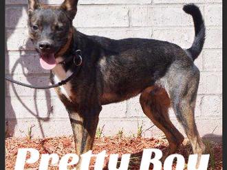 Meet Pretty Boy! FAV's Dog of the Week