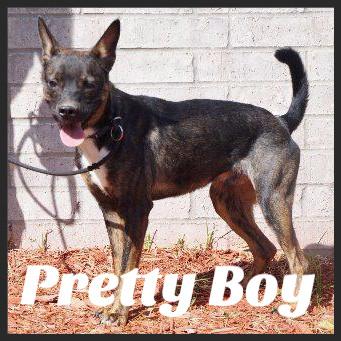 Pretty Boy (Pet ID# 36413)_Dog of the Week_Little Rock Animal Village_Friends of the Animal Village.jpg