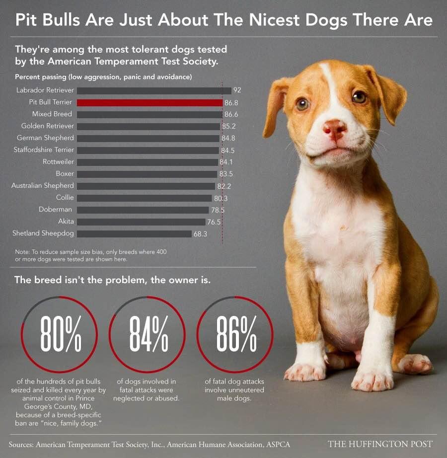 Pit Bull Stats