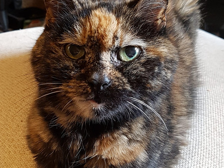 Sad news as Feline Network's oldest cat Maisie passes away