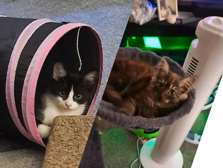 This week Franky & Freddy Joined us. Watch their journey.