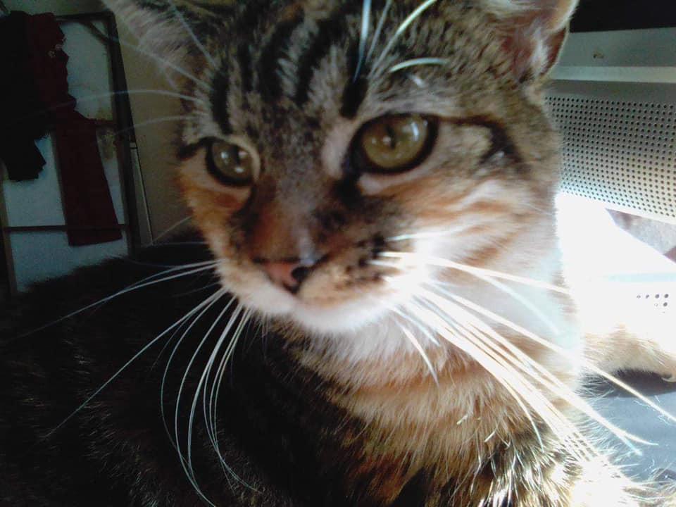 jan_cat1.jpg