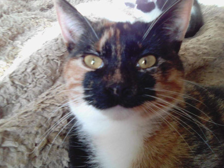 Meet January's Cats of the Month - cute sisters Rosie and Kiki