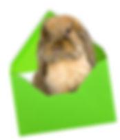 bunny_envelope.jpg