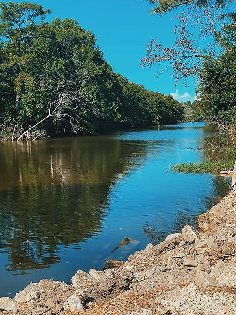 down on the bayou.JPG