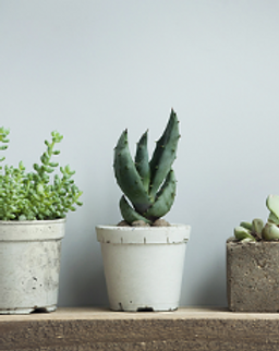 plant pots.tiff