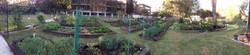 Wentworthville Community Garden