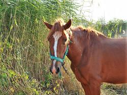cavalo site