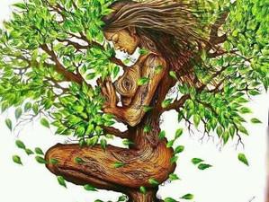 MEDITAÇÃO ENRAIZAMENTO:               meditação do mês