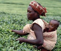 Craving…..Tanzania Treasure Tea