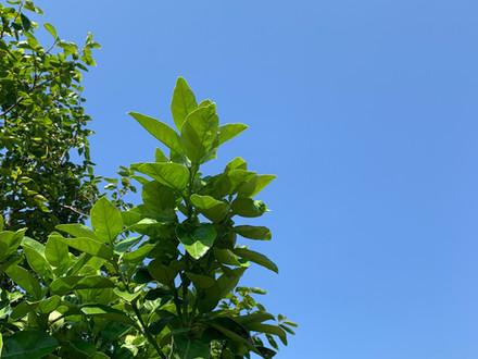 今日の空と柚子🍊