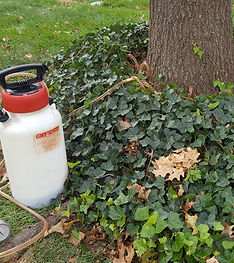 Allen's Tree Service, Inc. + systemic insecticde
