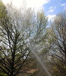 Allen's Tree Service, Inc + Horticultural Oil Spray