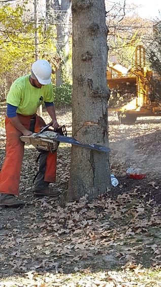 Allen's Tree Service Inc. tree removal