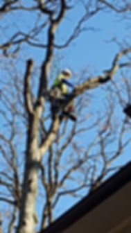Allen's Tree Service Inc. tree climber
