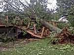 Allen's Tree Service, Inc. + Emergency Tree Service + 24 Hour Emergency Service