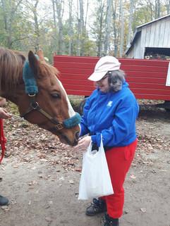 fedding the horses