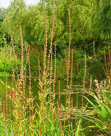 bush-environment-foliage-179089.jpg