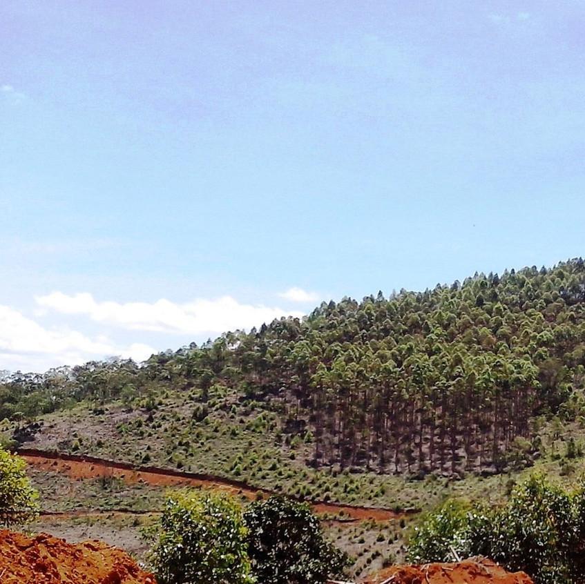 Área experimental do tratamento pré-lavra, em Dezembro de 2016 no município de Rosário da Limeira/MG
