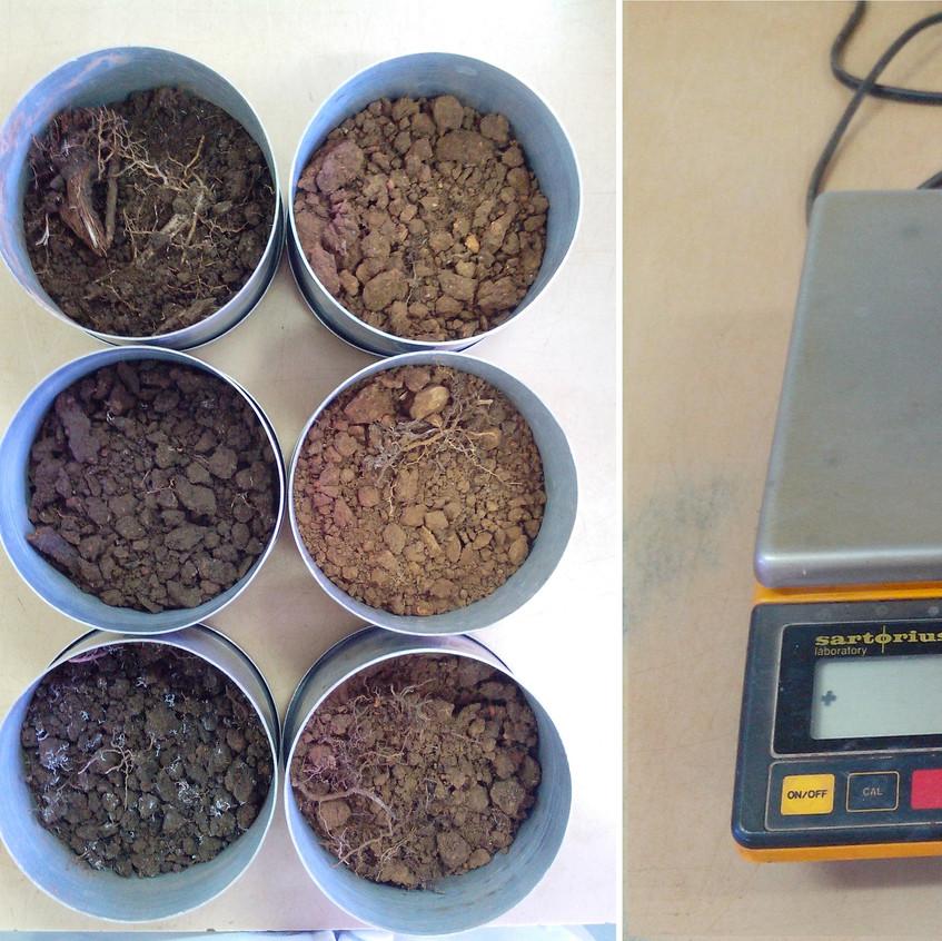 Amostras indeformadas de solo, preparadas para coleta do peso fresco, em março de 2017 no Laboratório de Física do Solo - DPS/UFV