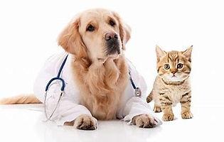 pet insurance.jpg