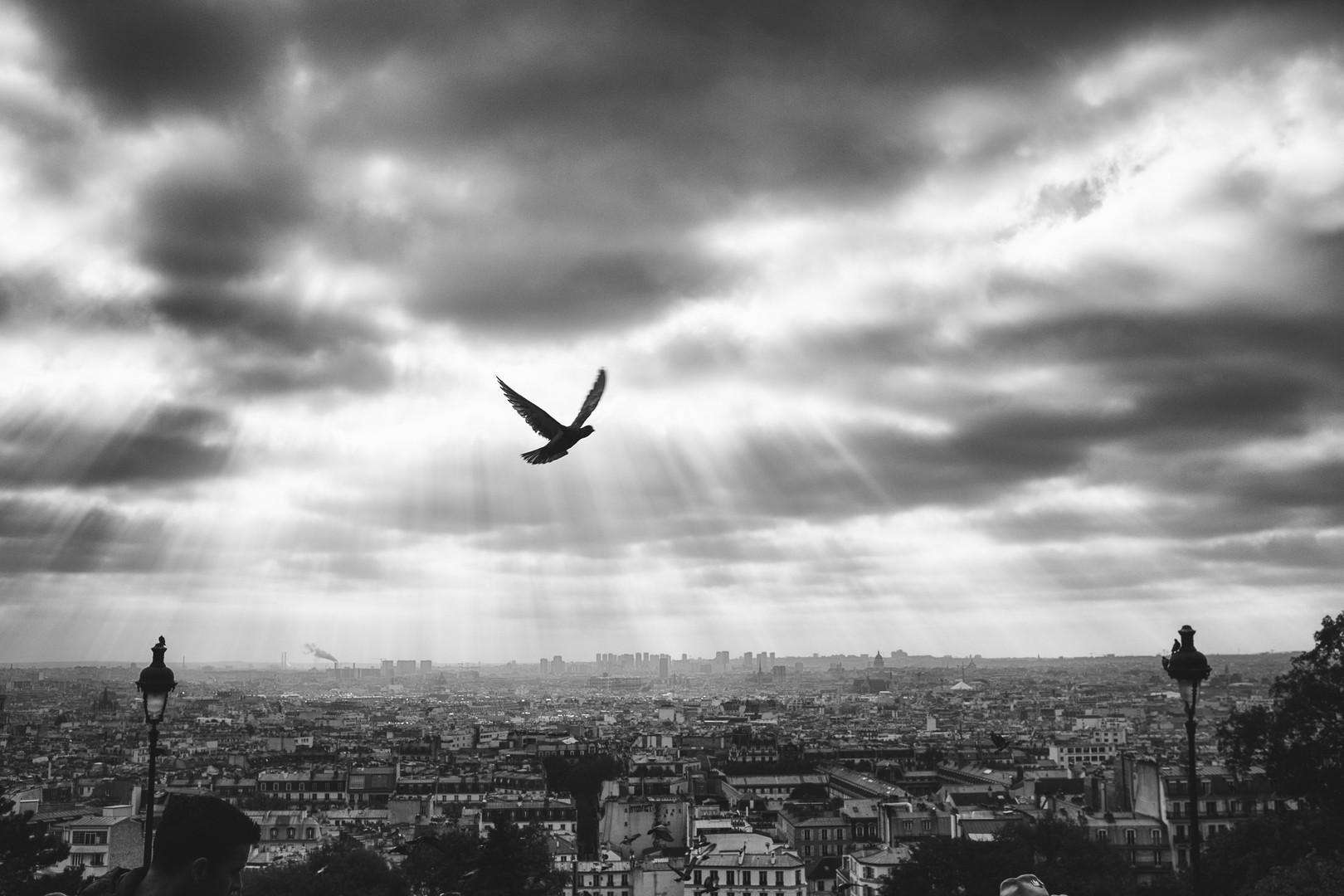 Damien Lorek, Paris (1).jpg