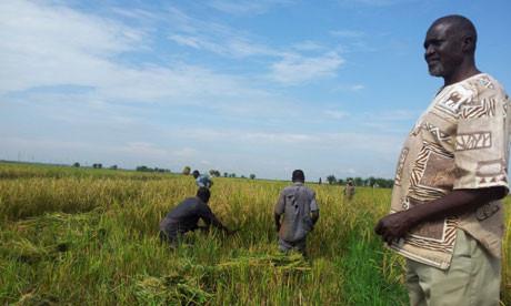 Hajji Ahmed Naleba is a rice farmer in Butaleja Eastern Uganda