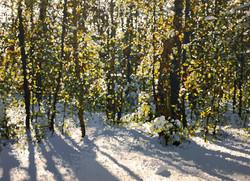 Winter Woods - OC - 48x66