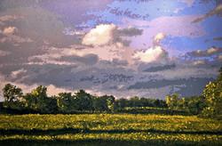 Amherst Meadow, Evening - OC 36 x 54