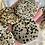 Thumbnail: Dalmatian Palm Stone