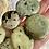 Thumbnail: Chytha Mini Palmstone