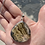 Thumbnail: Schalenblende Necklace With Silver Chain