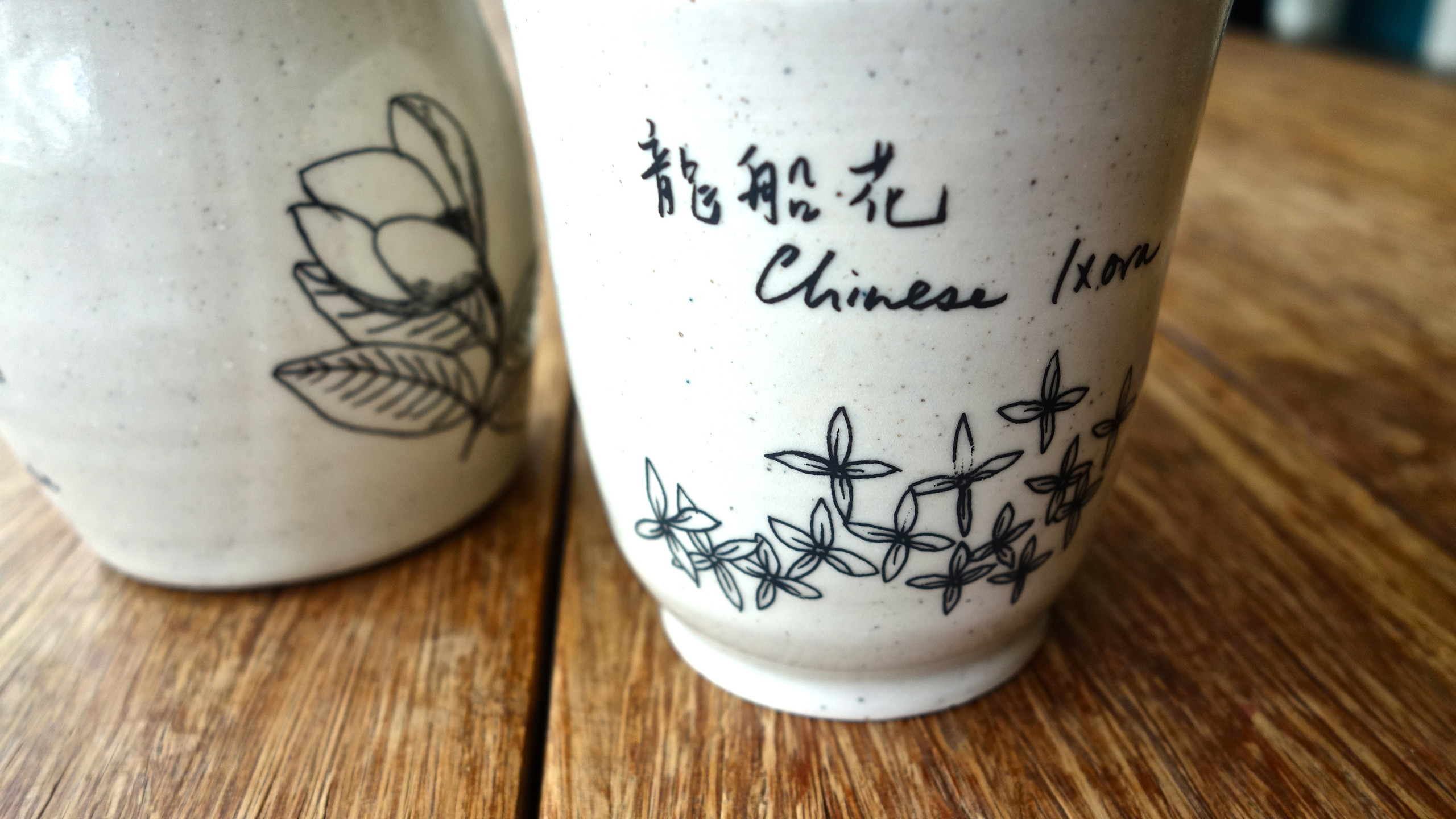 Chinese Ixora 龍船花