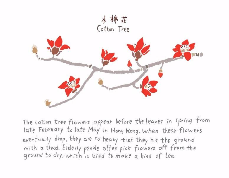 Cotton Tree 木棉花