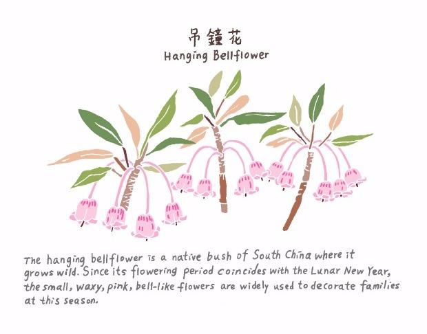 Hanging Bell Flower 吊鐘花