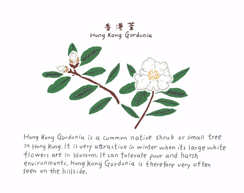 Hong Kong Gordonia 香港茶