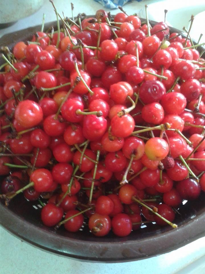 Sour Cherries from the garden.