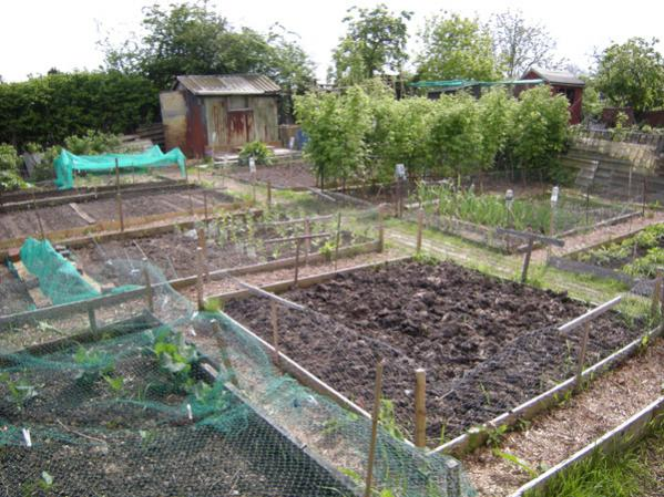 First plot, beds ready for action