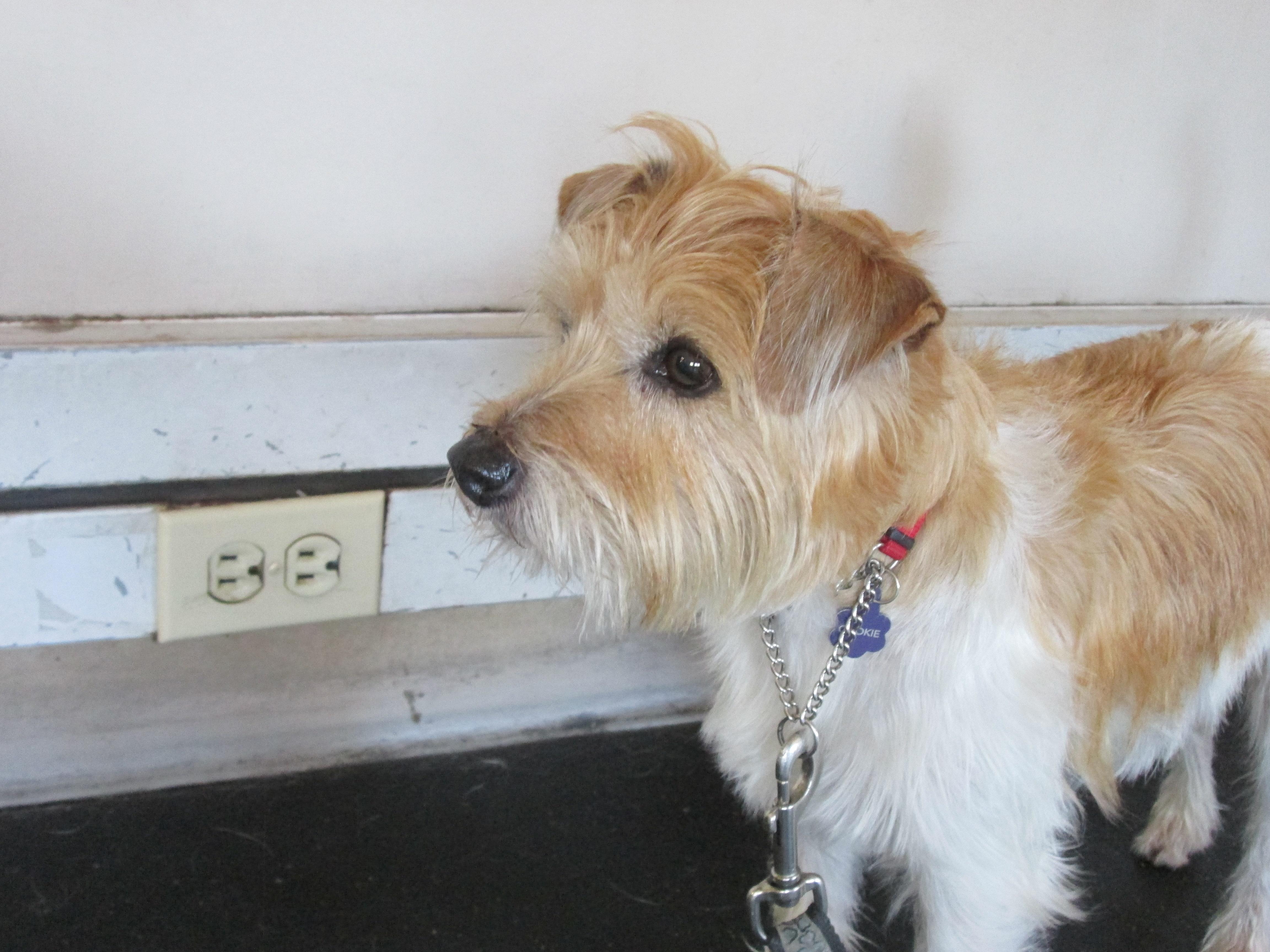Dog Daycare Toronto