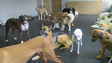 Dog Daycare at The Original Dog House  - Structured Daycare, Behavior Rehabilitation, Boarding, Obedience Training, Grooming