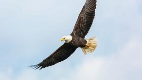 É tempo de recuperar altura, águia de Deus!