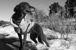 Dog stricking a pose